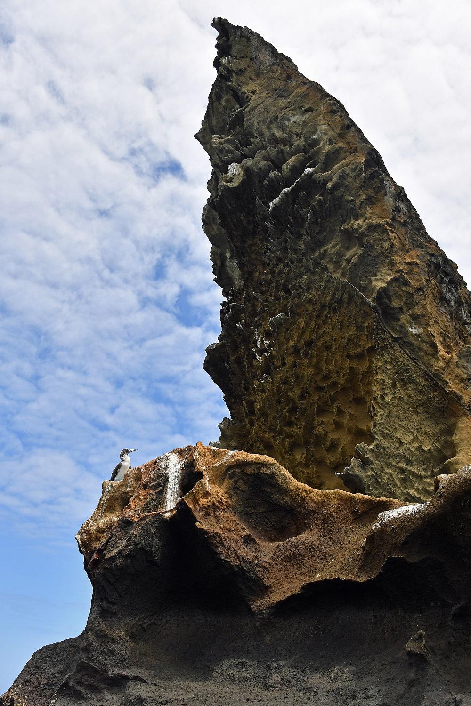 Galapagos boobie Pinnacle Rock