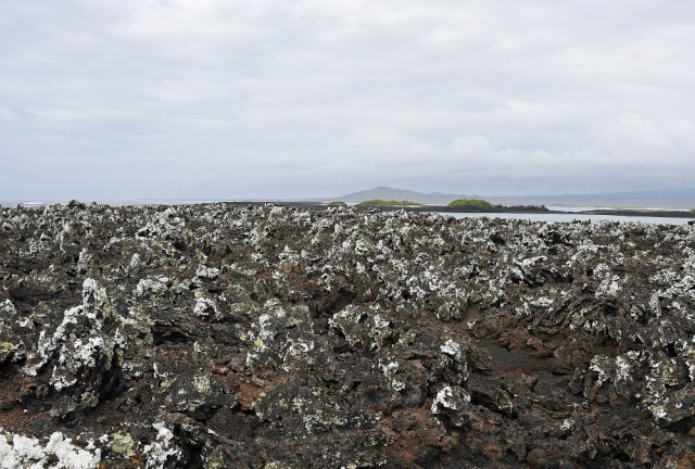 Lava fields Galapagos